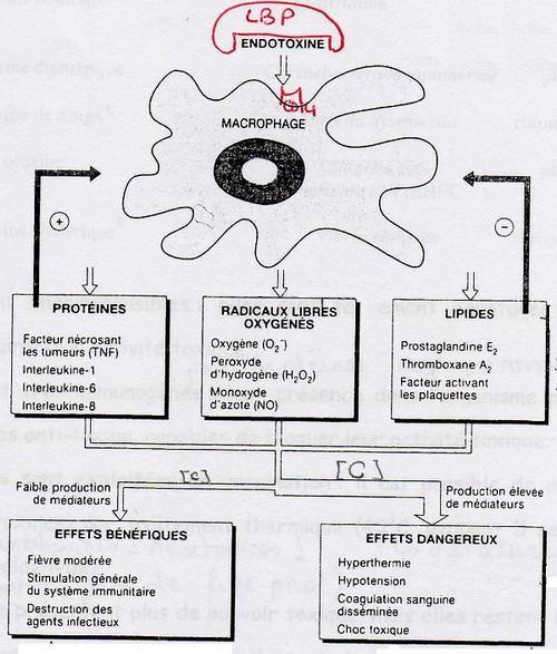 pastile preventive pentru viermi viermi oxiuri pampers