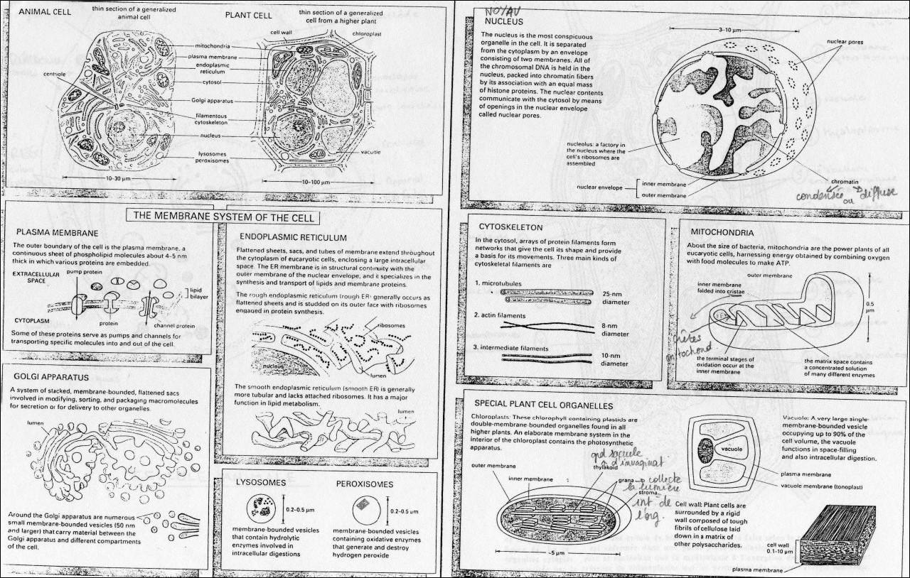 Biologie Cellulaire Pdf